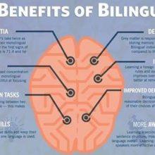 Le lingue straniere per proteggere il cervello dall'invecchiamento
